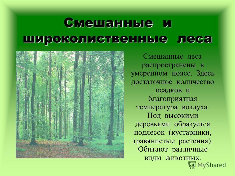 Смешанные и широколиственные леса Смешанные леса распространены в умеренном поясе. Здесь достаточное количество осадков и благоприятная температура воздуха. Под высокими деревьями образуется подлесок (кустарники, травянистые растения). Обитают различ