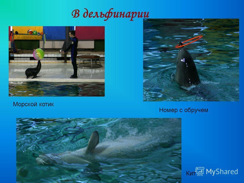 В дельфинарии Морской котик Номер с обручем Кит