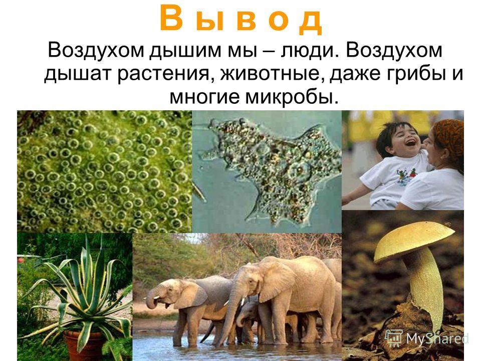 В ы в о д Воздухом дышим мы – люди. Воздухом дышат растения, животные, даже грибы и многие микробы.