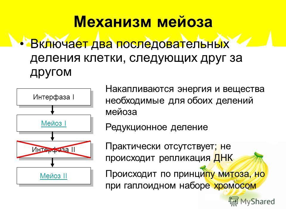 Механизм мейоза Включает два последовательных деления клетки, следующих друг за другом Интерфаза I Мейоз I Мейоз I Интерфаза II Мейоз II Мейоз II Накапливаются энергия и вещества необходимые для обоих делений мейоза Редукционное деление Практически о