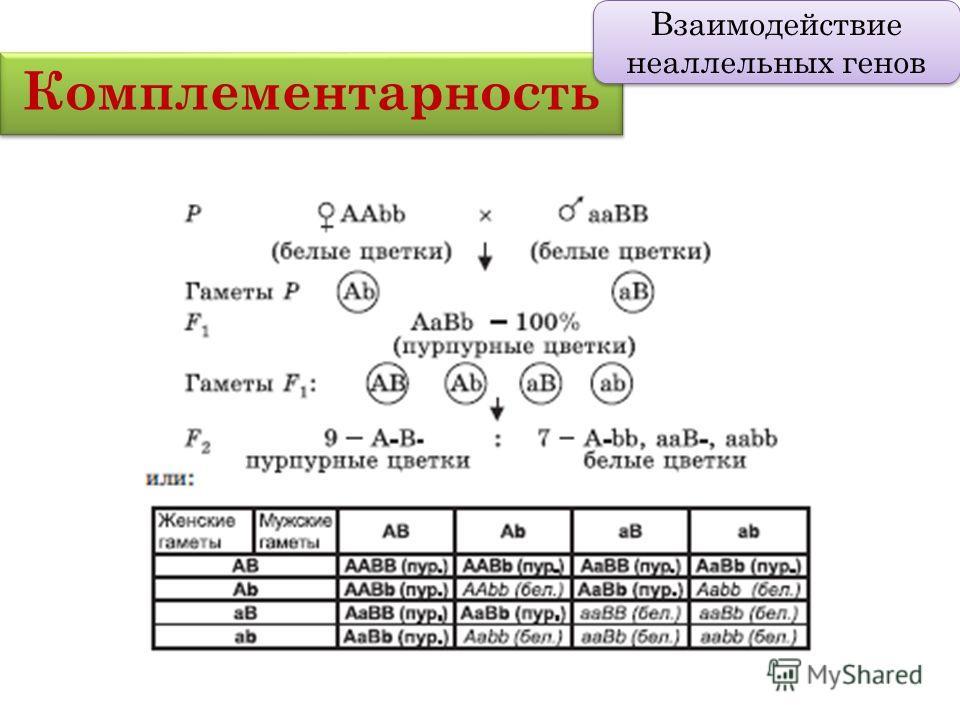 Комплементарность Взаимодействие неаллельных генов