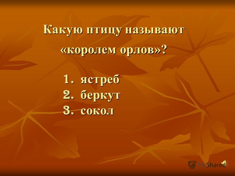 Какую птицу называют «королем орлов»? 1. ястреб 2. беркут 3. сокол