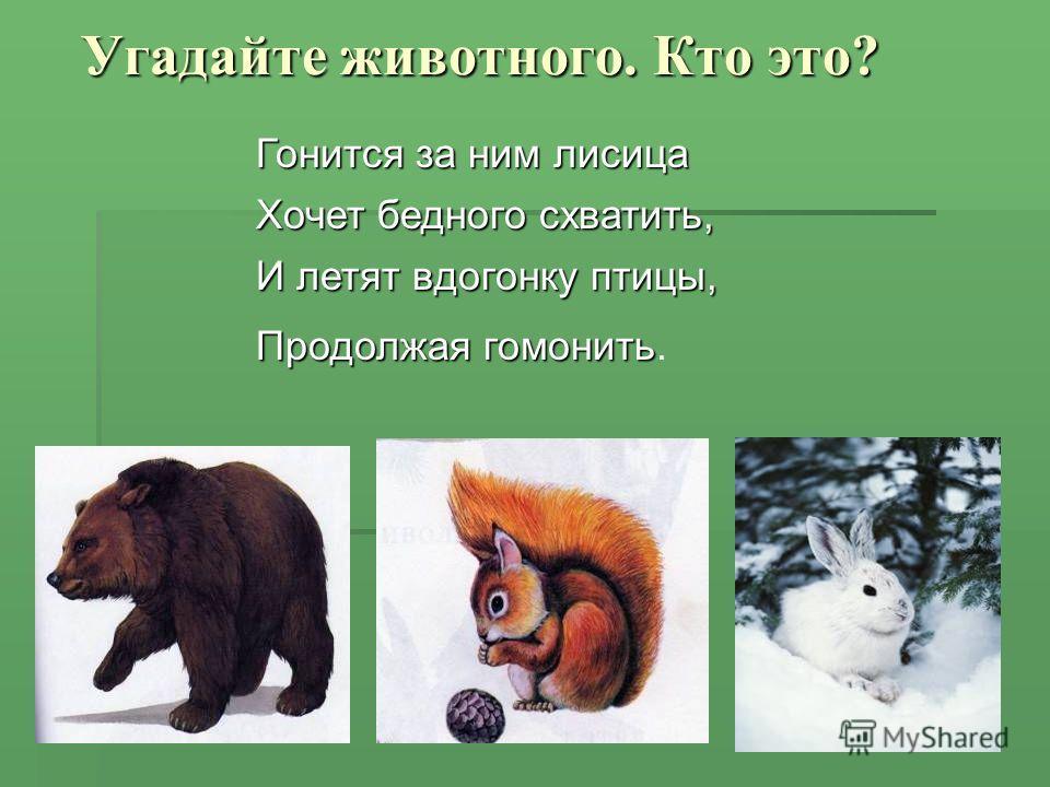 Угадайте животного. Кто это? Гонится за ним лисица Хочет бедного схватить, И летят вдогонку птицы, Продолжая гомонить Продолжая гомонить.