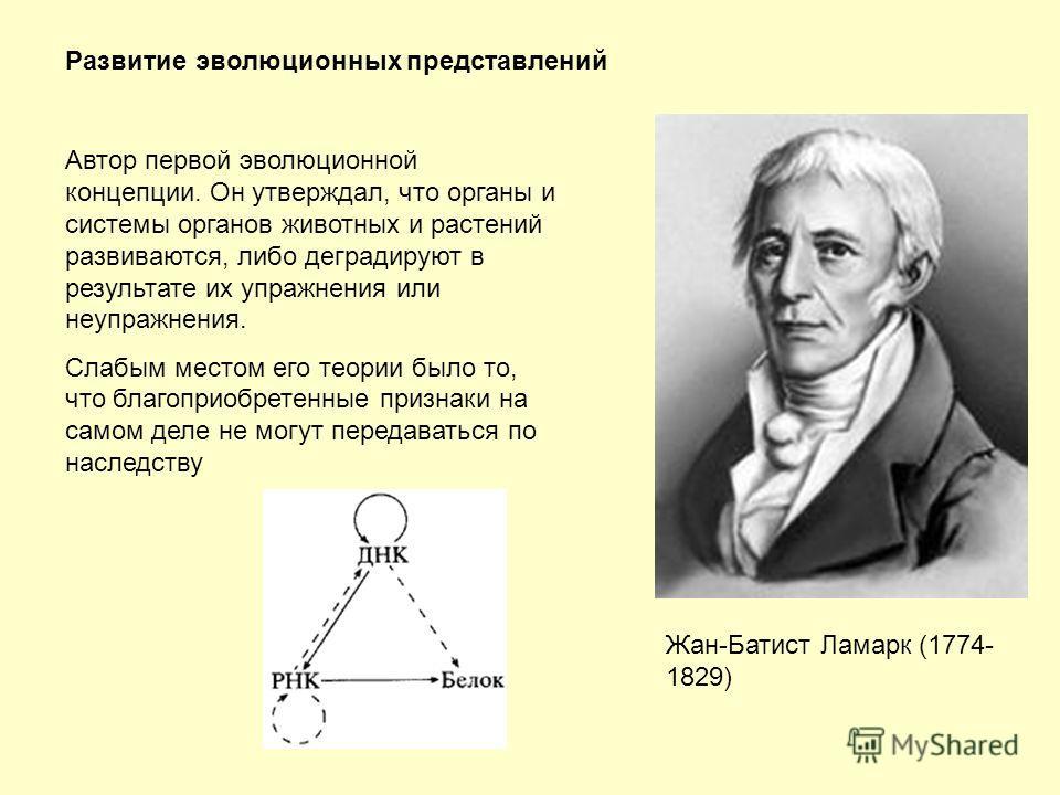 Развитие эволюционных представлений Жан-Батист Ламарк (1774- 1829) Автор первой эволюционной концепции. Он утверждал, что органы и системы органов животных и растений развиваются, либо деградируют в результате их упражнения или неупражнения. Слабым м