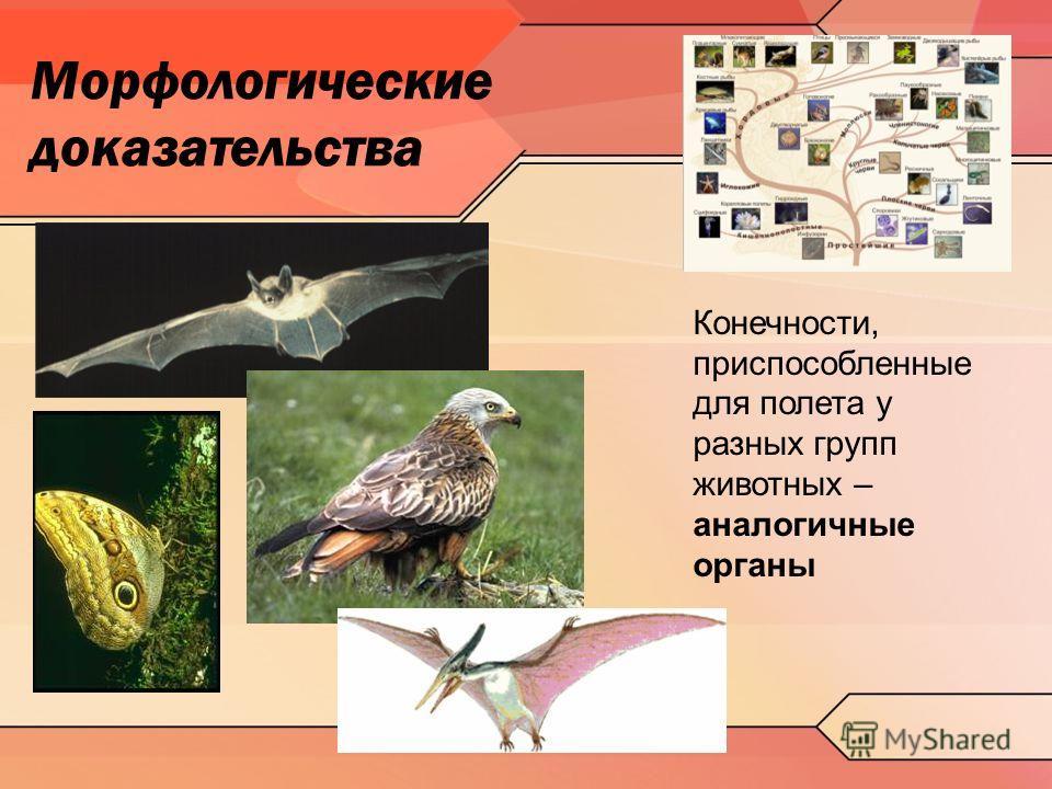 Морфологические доказательства Конечности, приспособленные для полета у разных групп животных – аналогичные органы