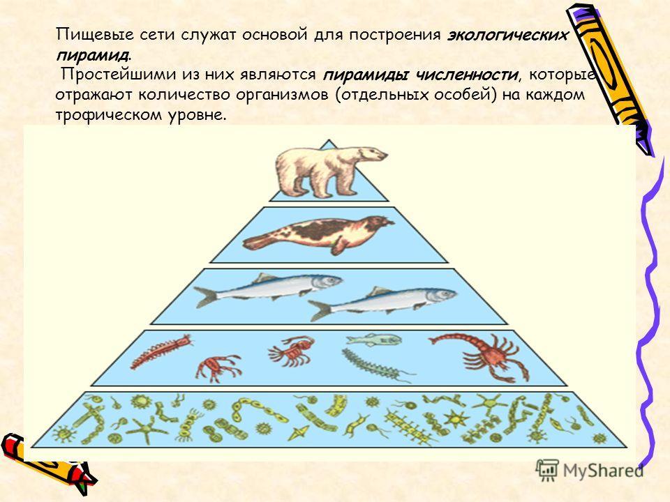 Пищевые сети служат основой для построения экологических пирамид. Простейшими из них являются пирамиды численности, которые отражают количество организмов (отдельных особей) на каждом трофическом уровне.