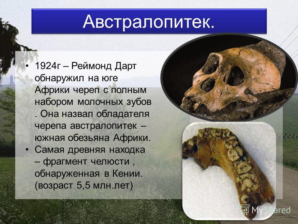 Австралопитек. 1924г – Реймонд Дарт обнаружил на юге Африки череп с полным набором молочных зубов. Она назвал обладателя черепа австралопитек – южная обезьяна Африки. Самая древняя находка – фрагмент челюсти, обнаруженная в Кении. (возраст 5,5 млн.ле
