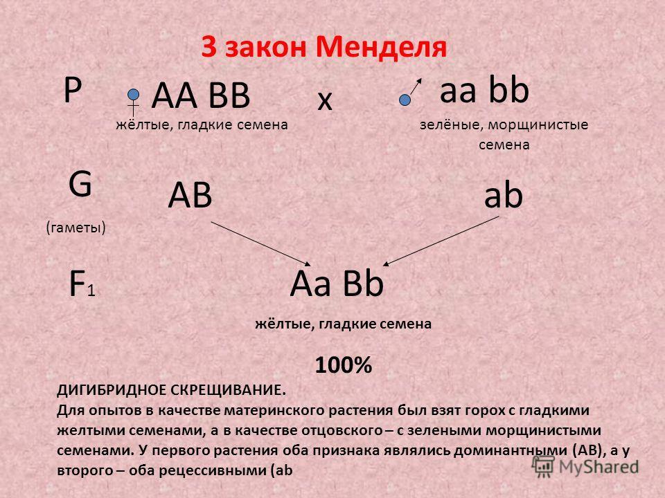 Р АА ВВ аа bb х жёлтые, гладкие семеназелёные, морщинистые семена G (гаметы) АВаbаb F1F1 Аа Bb жёлтые, гладкие семена 100% 3 закон Менделя ДИГИБРИДНОЕ СКРЕЩИВАНИЕ. Для опытов в качестве материнского растения был взят горох с гладкими желтыми семенами