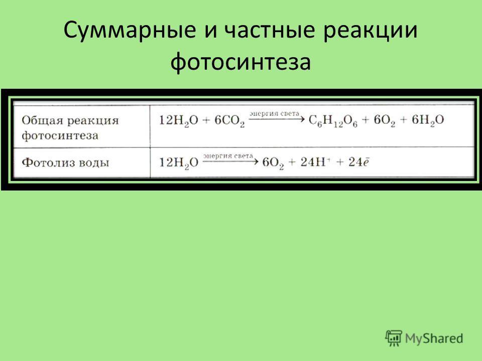 Суммарные и частные реакции фотосинтеза