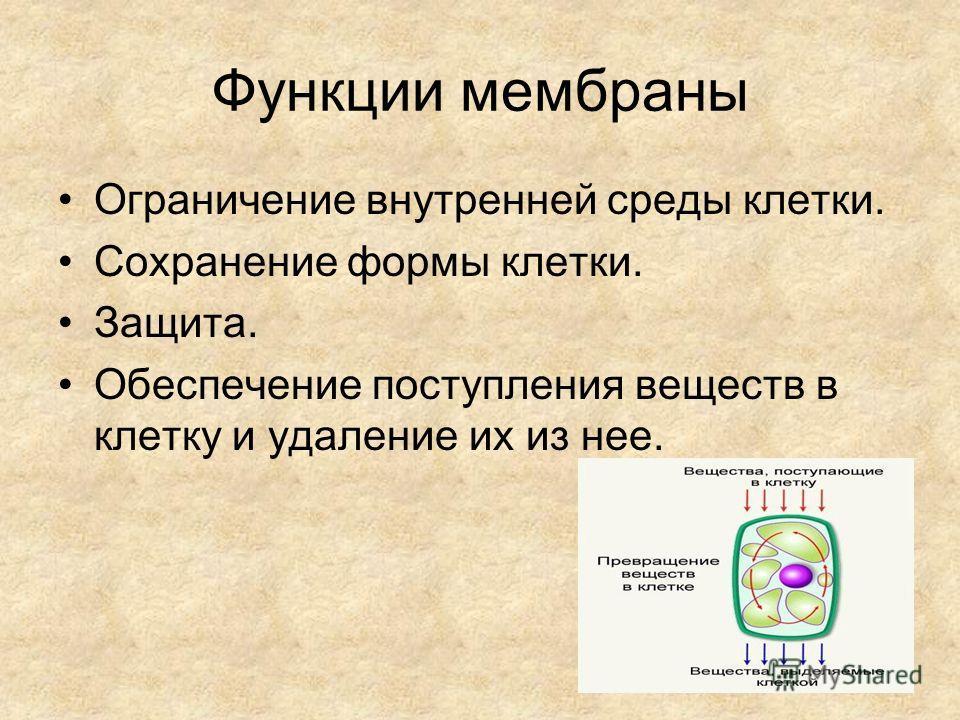Функции мембраны Ограничение внутренней среды клетки. Сохранение формы клетки. Защита. Обеспечение поступления веществ в клетку и удаление их из нее.