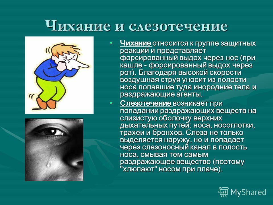 Чихание и слезотечение Чихание относится к группе защитных реакций и представляет форсированный выдох через нос (при кашле - форсированный выдох через рот). Благодаря высокой скорости воздушная струя уносит из полости носа попавшие туда инородние тел