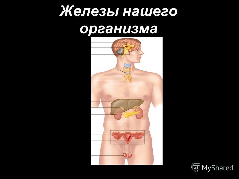 Железы нашего организма