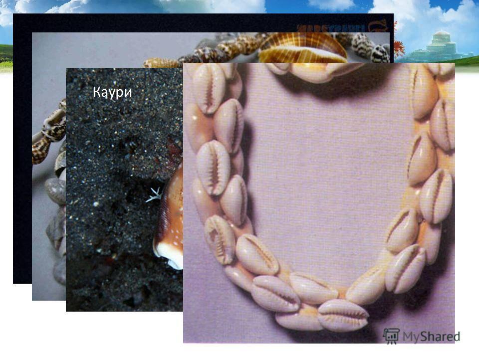 Раковины используются как сувениры и поделочный материал. В старину раковины каури в южных странах служили разменной монетой. Каури