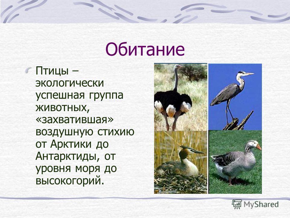 Обитание Птицы – экологически успешная группа животных, «захватившая» воздушную стихию от Арктики до Антарктиды, от уровня моря до высокогорий.