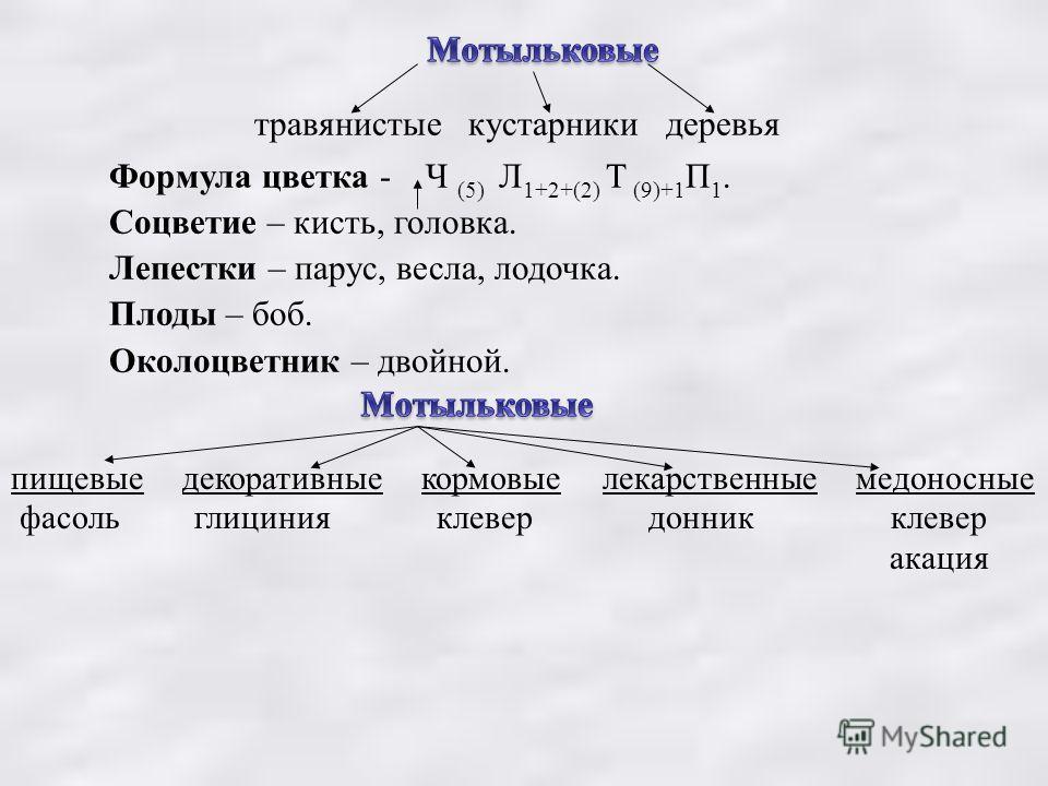 травянистые кустарники деревья Формула цветка - Ч (5) Л 1+2+(2) Т (9)+1 П 1. Соцветие – кисть, головка. Лепестки – парус, весла, лодочка. Плоды – боб. Околоцветник – двойной. пищевые декоративные кормовые лекарственные медоносные фасоль глициния клев
