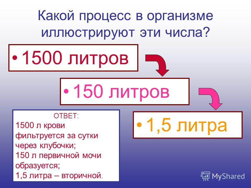 Какой процесс в организме иллюстрируют эти числа? 1500 литров 150 литров 1,5 литра ОТВЕТ: 1500 л крови фильтруется за сутки через клубочки; 150 л первичной мочи образуется; 1,5 литра – вторичной.