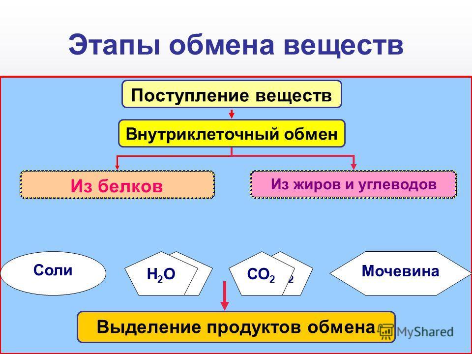Этапы обмена веществ Н2ОН2ОСО 2 Мочевина Соли Поступление веществ Н2ОН2ОСО 2 Внутриклеточный обмен Из жиров и углеводов Из белков Выделение продуктов обмена
