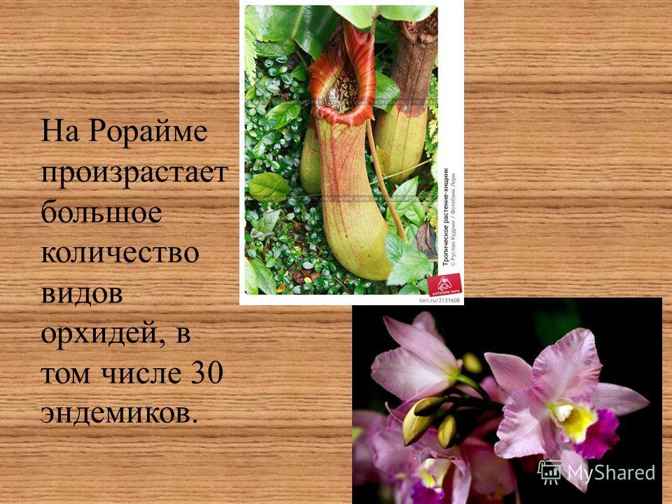 На Рорайме произрастает большое количество видов орхидей, в том числе 30 эндемиков.