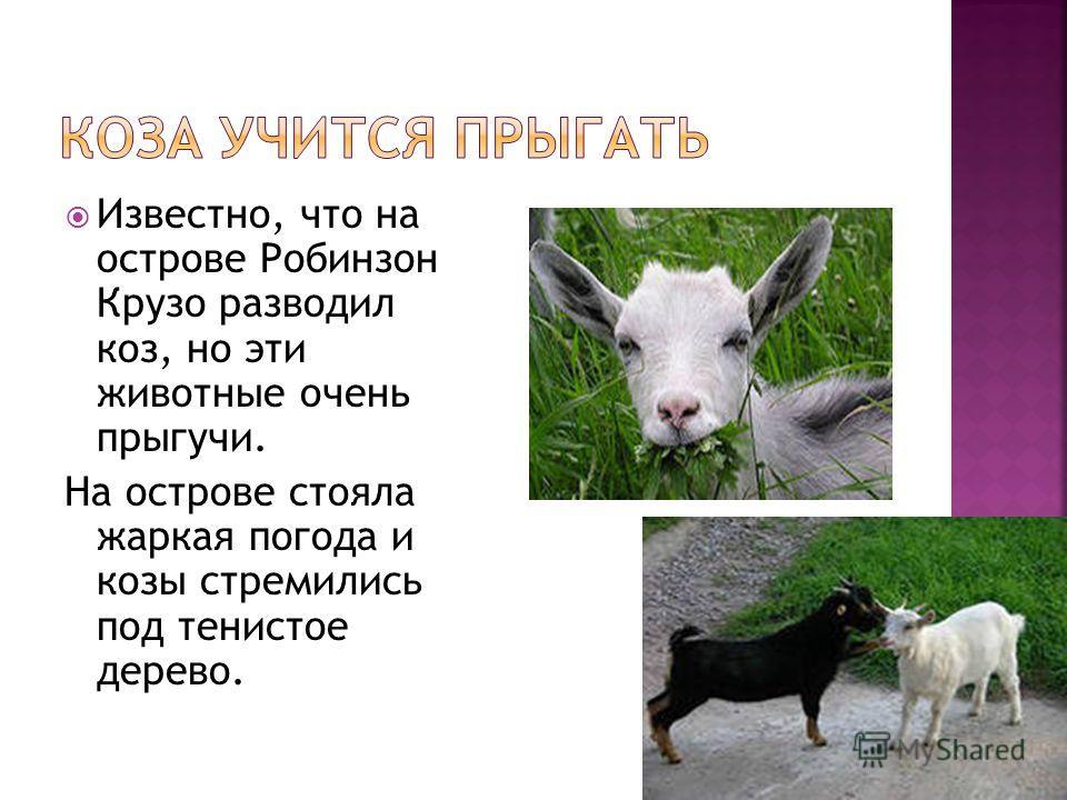 Известно, что на острове Робинзон Крузо разводил коз, но эти животные очень прыгучи. На острове стояла жаркая погода и козы стремились под тенистое дерево.