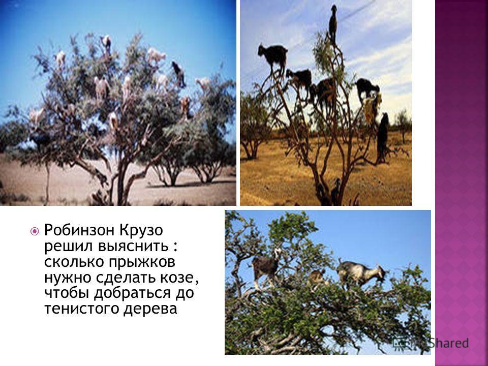 Робинзон Крузо решил выяснить : сколько прыжков нужно сделать козе, чтобы добраться до тенистого дерева