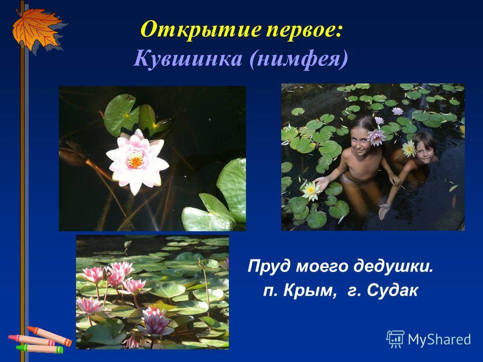 Открытие первое: Кувшинка (нимфея) Пруд моего дедушки. п. Крым, г. Судак