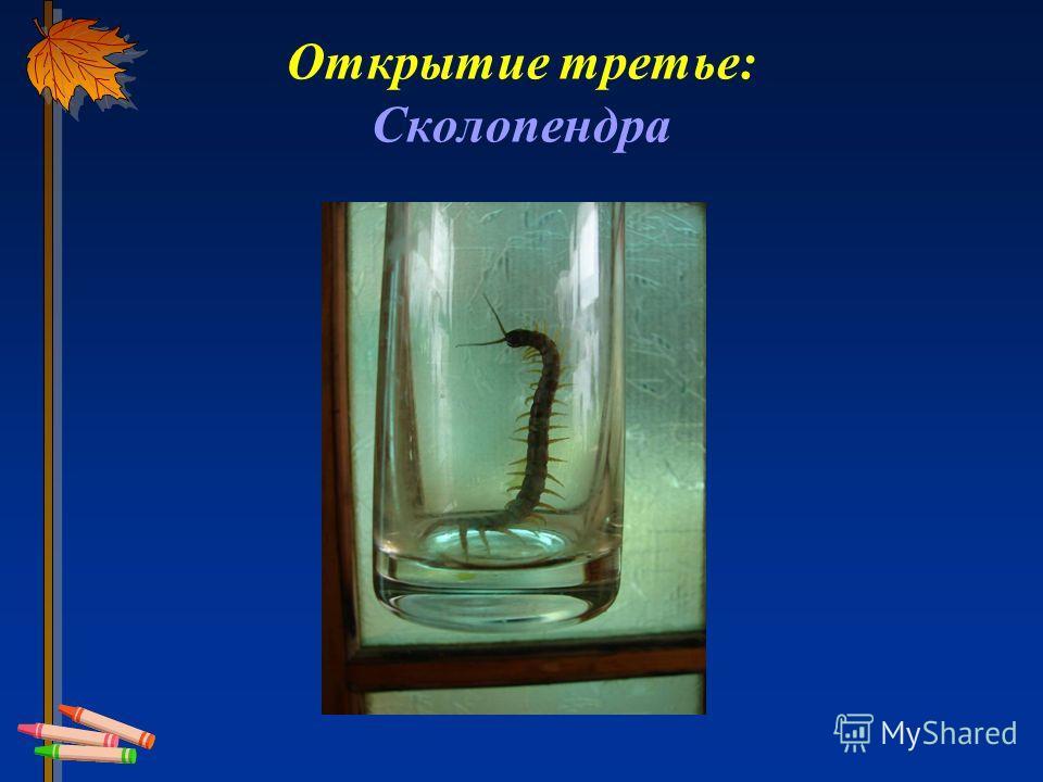 Открытие третье: Сколопендра