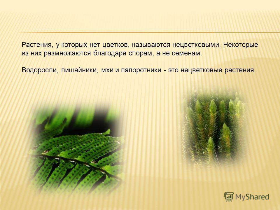 Растения, у которых нет цветков, называются нецветковыми. Некоторые из них размножаются благодаря спорам, а не семенам. Водоросли, лишайники, мхи и папоротники - это нецветковые растения.