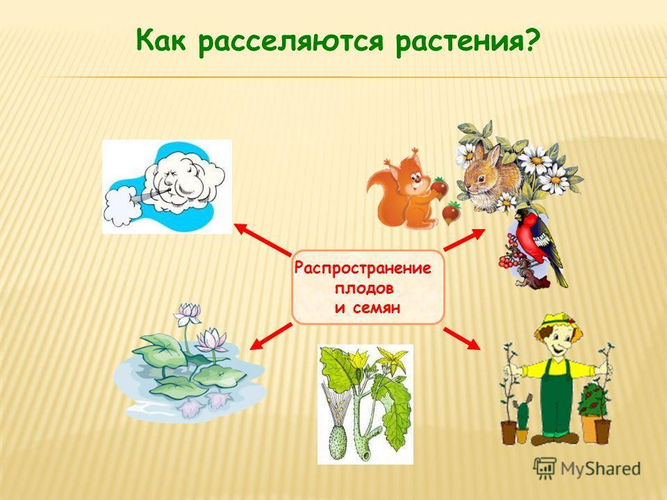 Как расселяются растения? Распространение плодов и семян