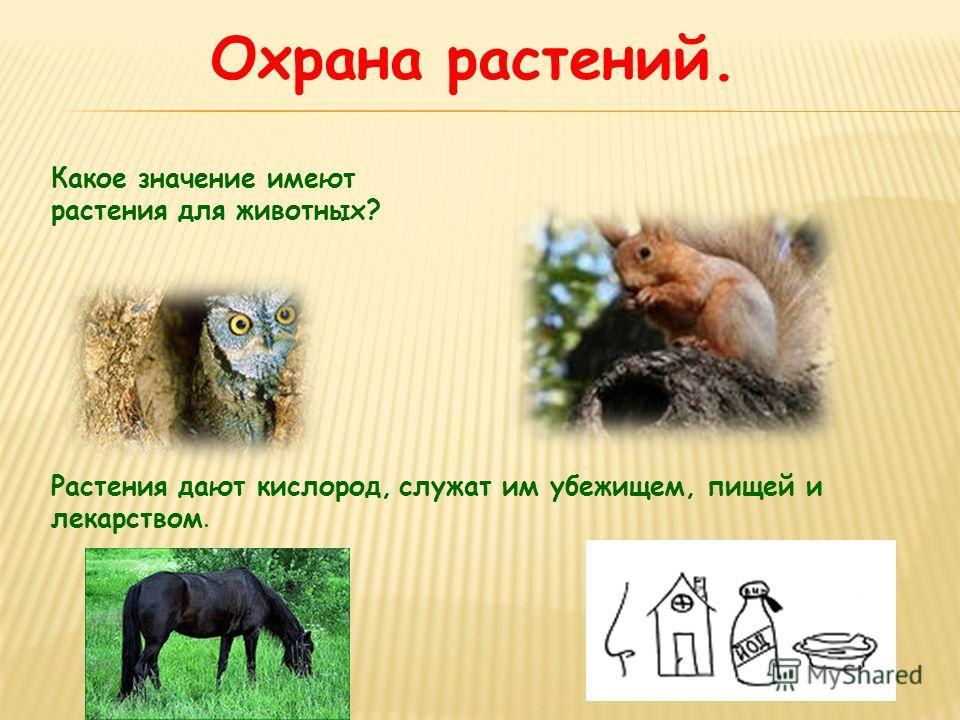 Охрана растений. Какое значение имеют растения для животных? Растения дают кислород, служат им убежищем, пищей и лекарством.
