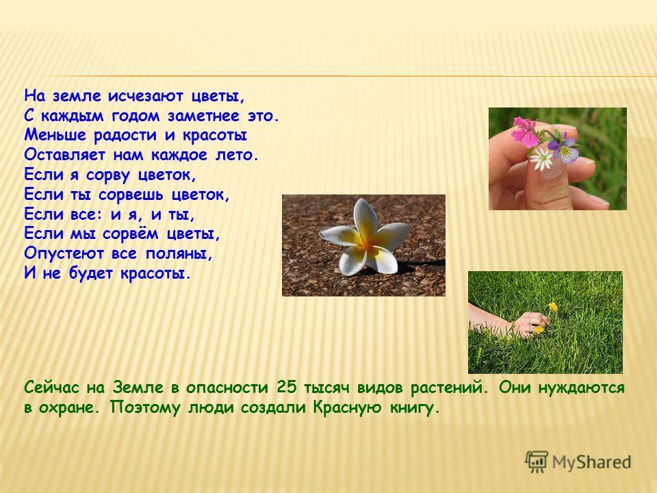 На земле исчезают цветы, С каждым годом заметнее это. Меньше радости и красоты Оставляет нам каждое лето. Если я сорву цветок, Если ты сорвешь цветок, Если все: и я, и ты, Если мы сорвём цветы, Опустеют все поляны, И не будет красоты. Сейчас на Земле