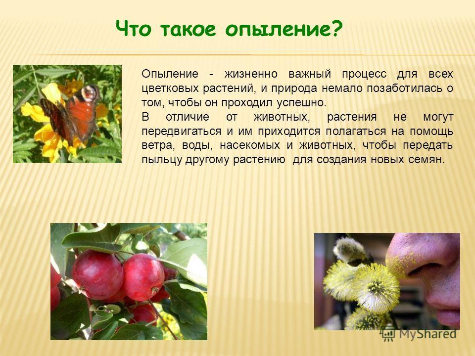 Что такое опыление? Опыление - жизненно важный процесс для всех цветковых растений, и природа немало позаботилась о том, чтобы он проходил успешно. В отличие от животных, растения не могут передвигаться и им приходится полагаться на помощь ветра, вод