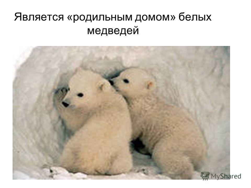 Является «родильным домом» белых медведей