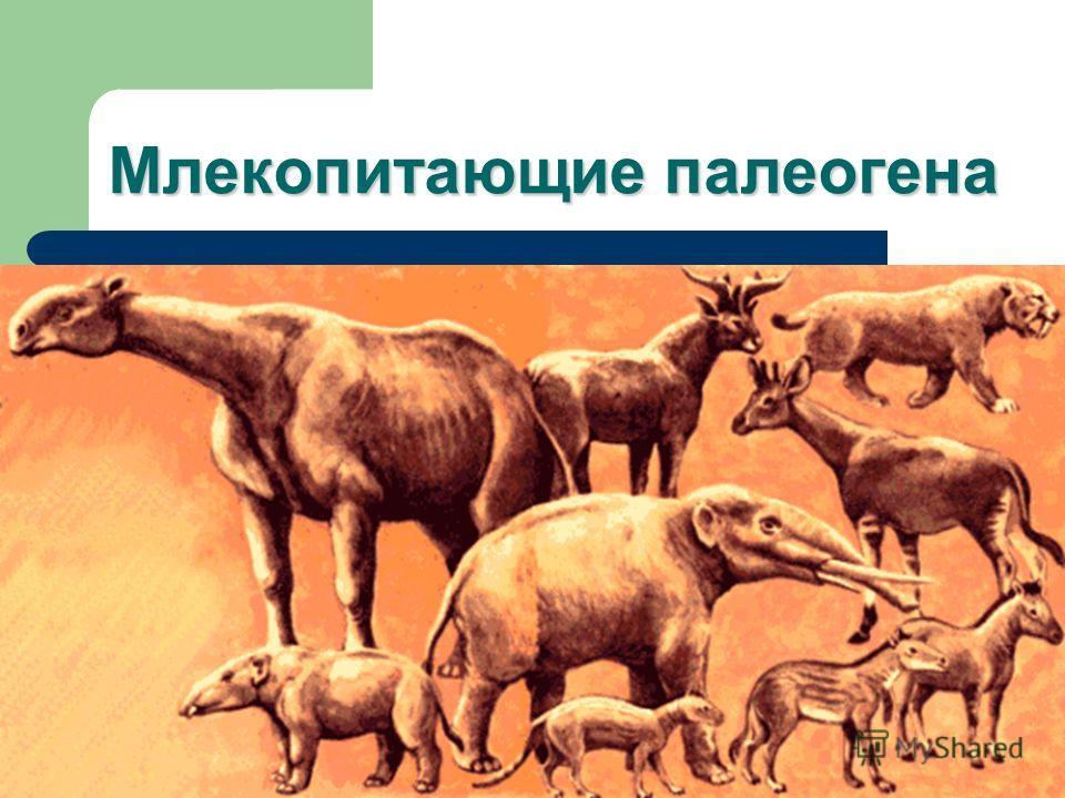 Млекопитающие палеогена
