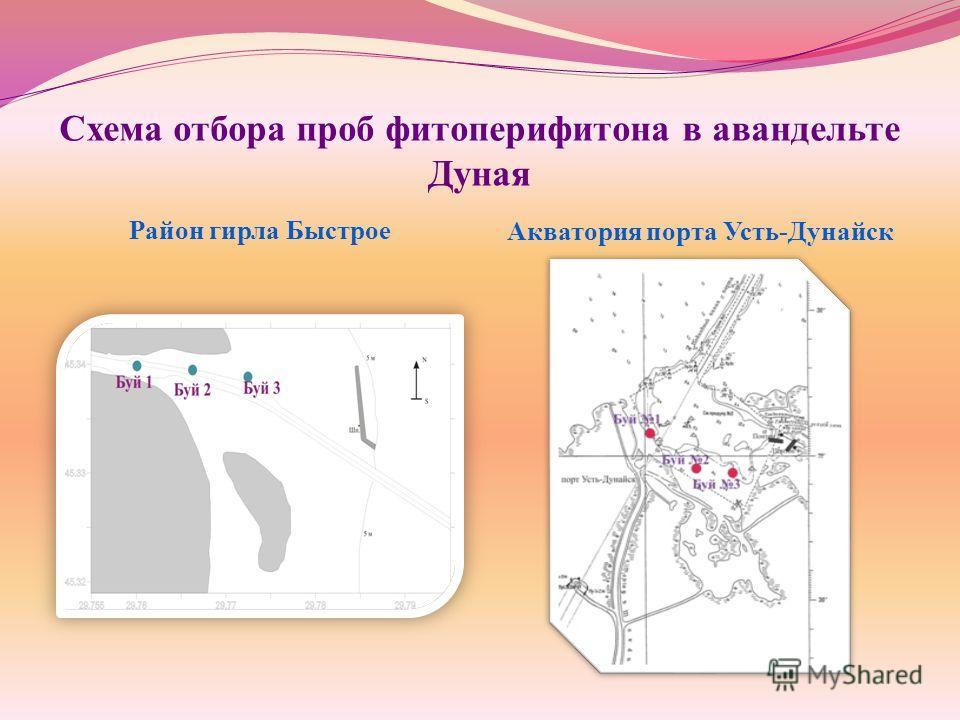 Схема отбора проб фитоперифитона в авандельте Дуная Район гирла Быстрое Акватория порта Усть-Дунайск