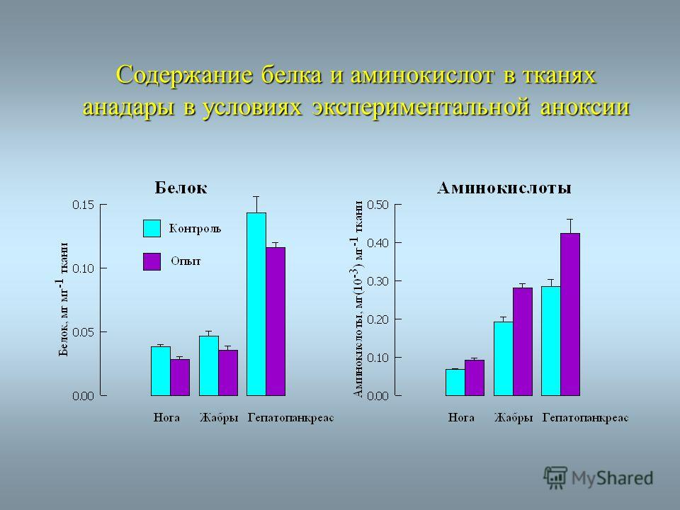 Cодержание белка и аминокислот в тканях анадары в условиях экспериментальной аноксии