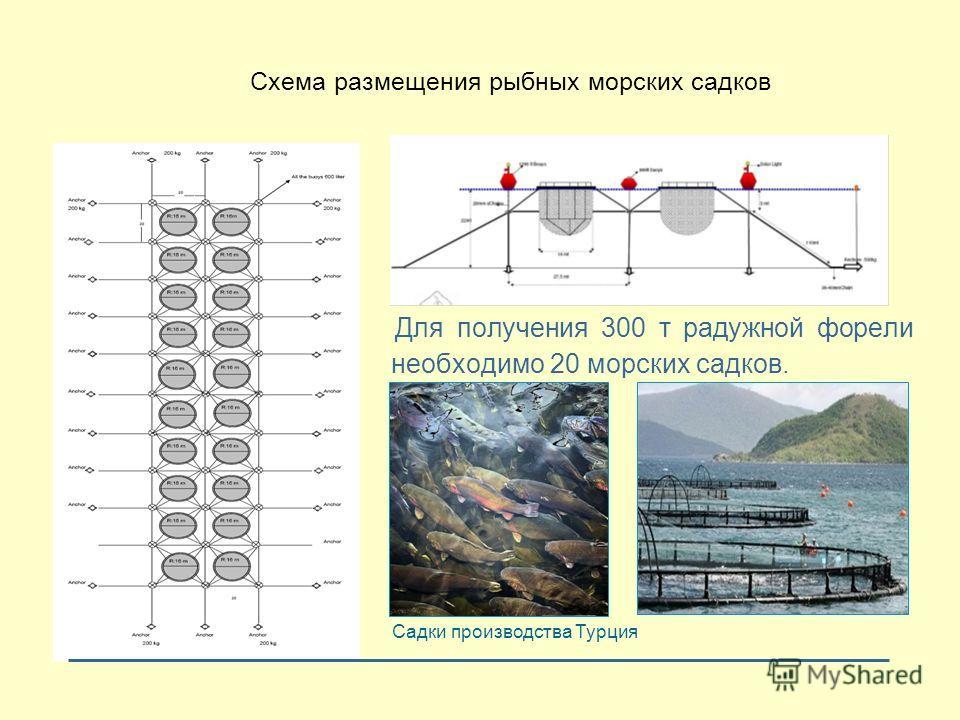 Для получения 300 т радужной форели необходимо 20 морских садков. Садки производства Турция Схема размещения рыбных морских садков