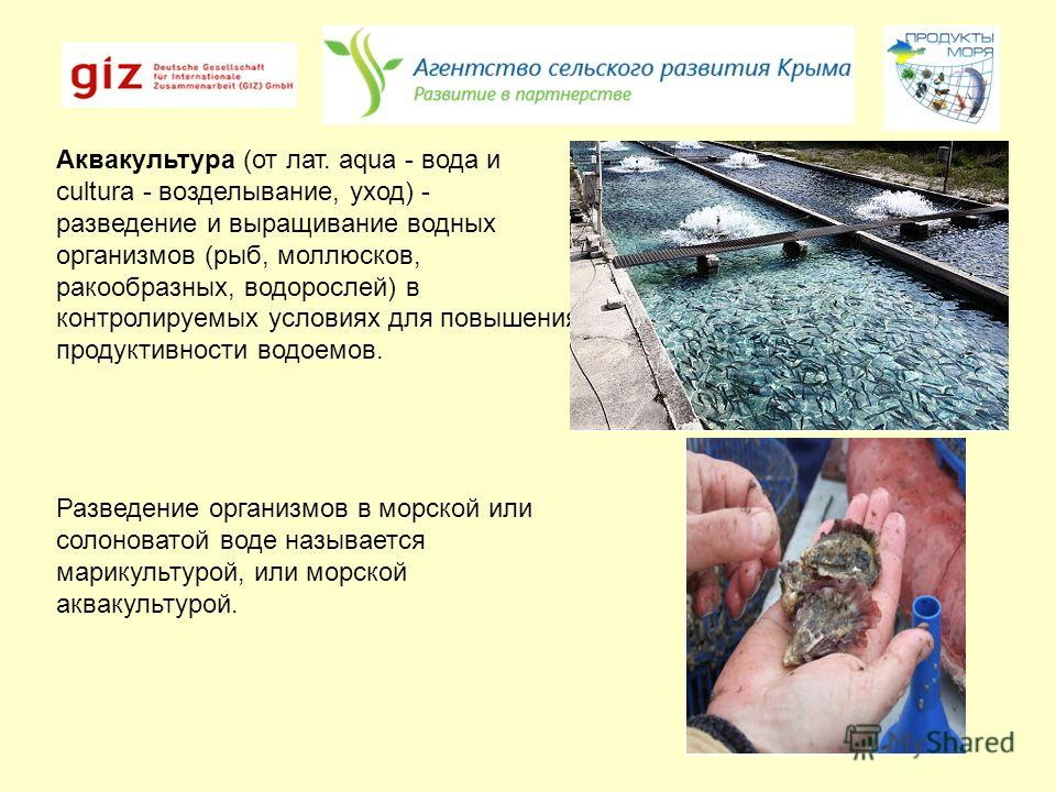 Аквакультура (от лат. aqua - вода и cultura - возделывание, уход) - разведение и выращивание водных организмов (рыб, моллюсков, ракообразных, водорослей) в контролируемых условиях для повышения продуктивности водоемов. Разведение организмов в морской