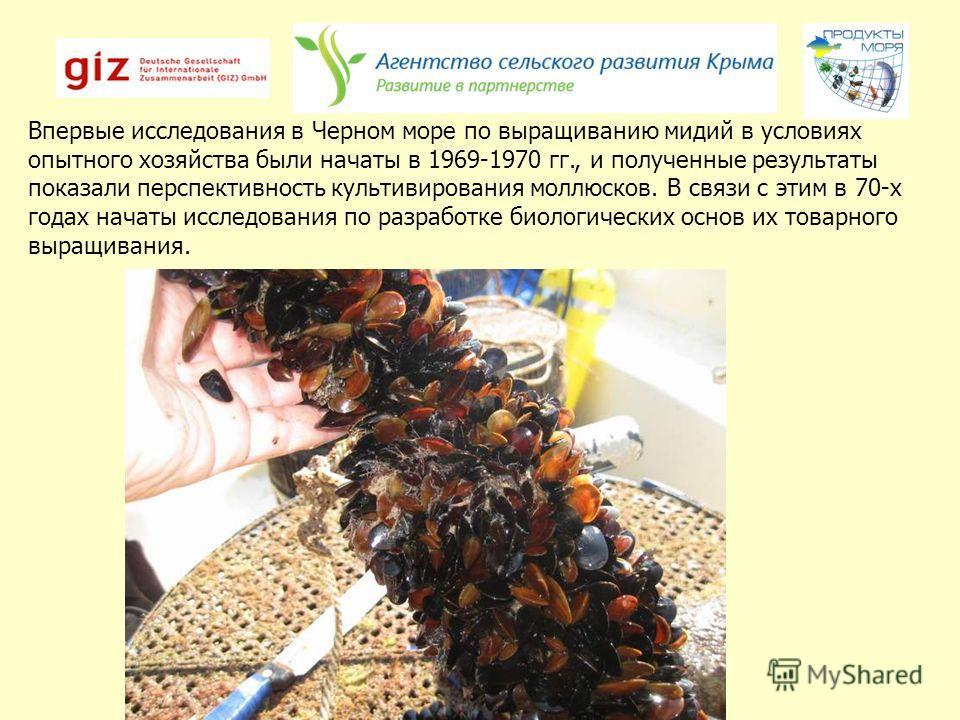 Впервые исследования в Черном море по выращиванию мидий в условиях опытного хозяйства были начаты в 1969-1970 гг., и полученные результаты показали перспективность культивирования моллюсков. В связи с этим в 70-х годах начаты исследования по разработ