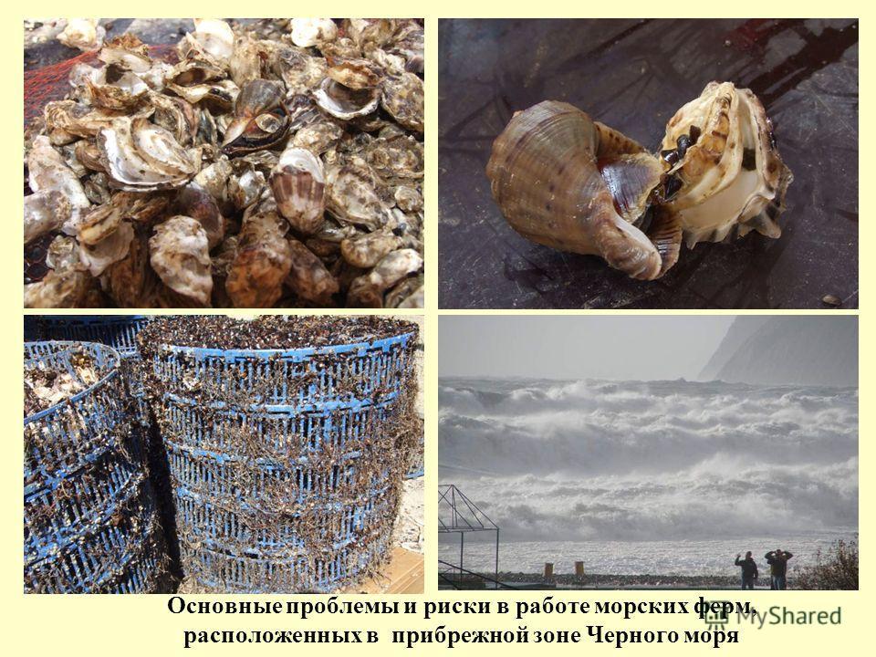 Основные проблемы и риски в работе морских ферм, расположенных в прибрежной зоне Черного моря