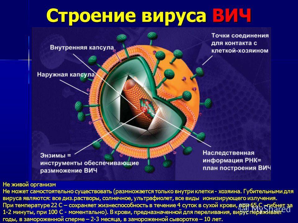 Строение вируса ВИЧ Не живой организм Не может самостоятельно существовать (размножается только внутри клетки - хозяина. Губительными для вируса являются: все диз.растворы, солнечное, ультрафиолет, все виды ионизирующего излучения. При температуре 22