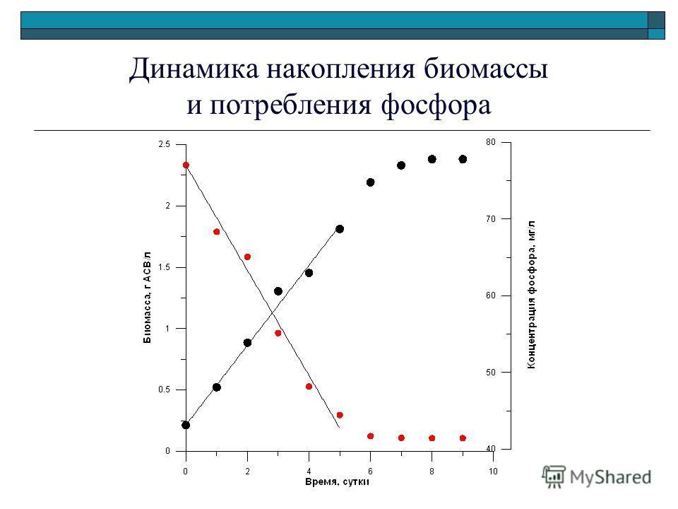 Динамика накопления биомассы и потребления фосфора