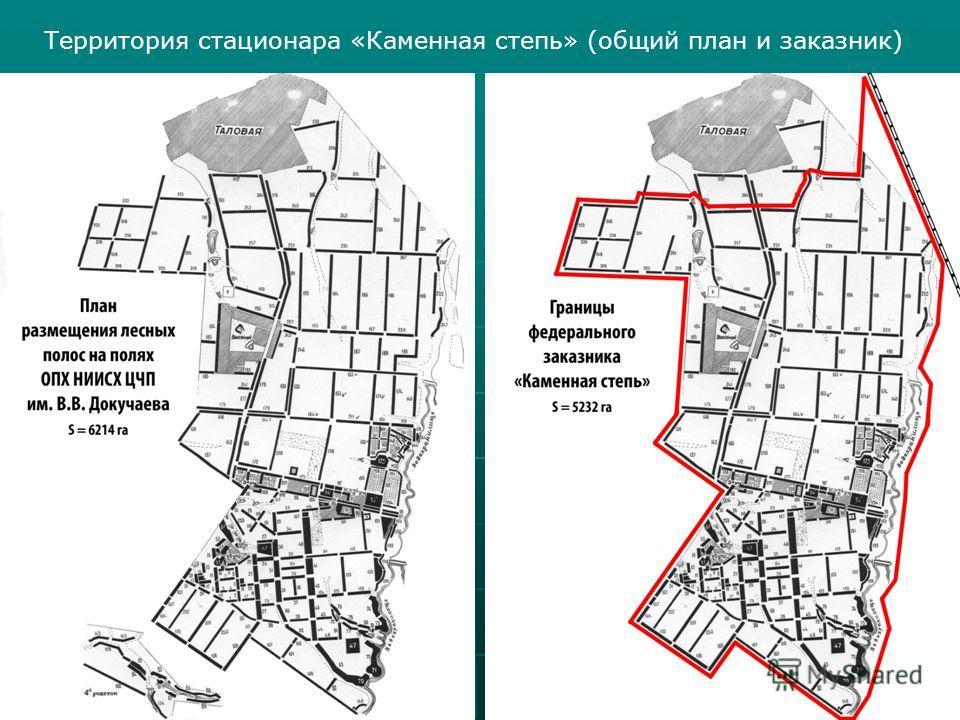 Территория стационара «Каменная степь» (общий план и заказник)