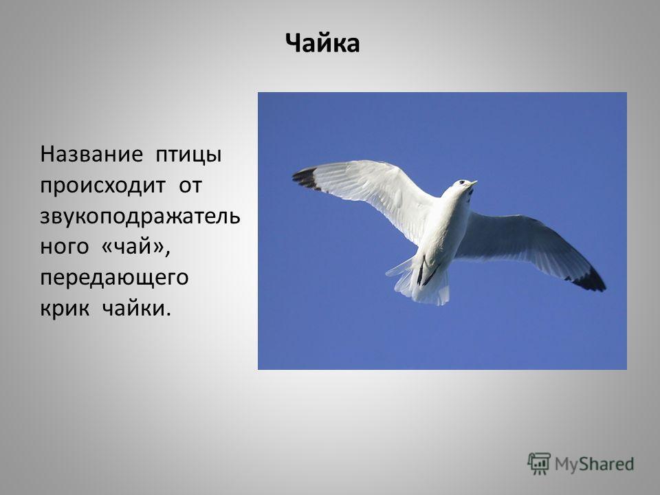 Чайка Название птицы происходит от звукоподражатель ного «чай», передающего крик чайки.