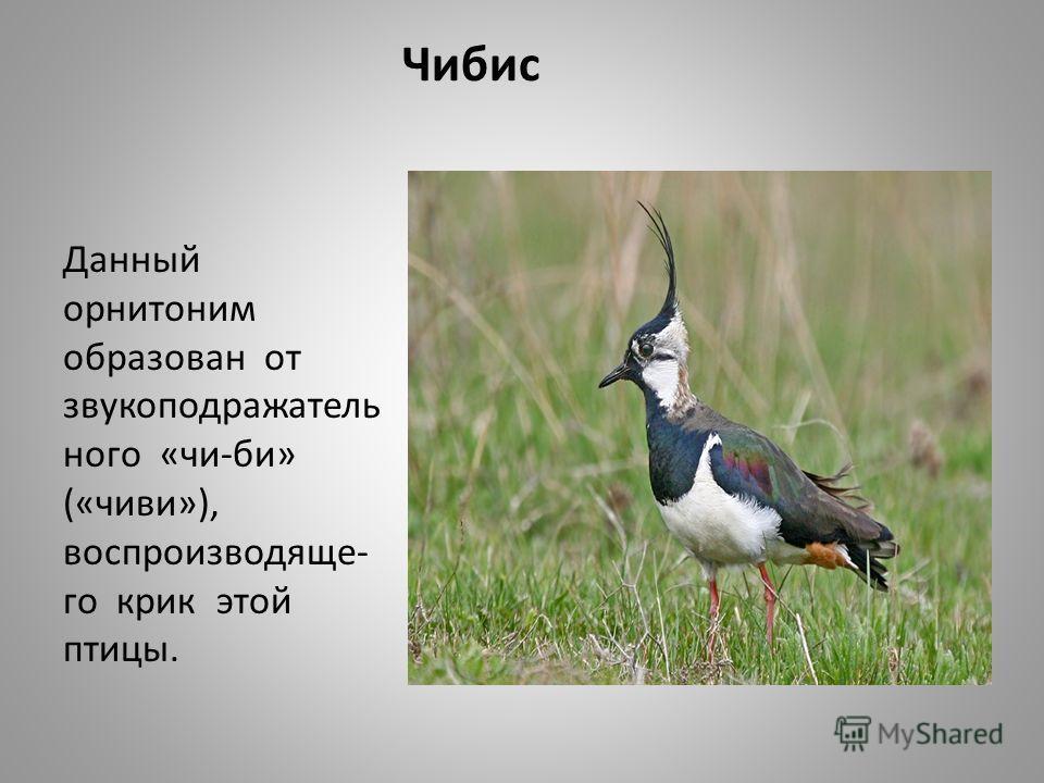 Чибис Данный орнитоним образован от звукоподражатель ного «чи-би» («чиви»), воспроизводяще- го крик этой птицы.