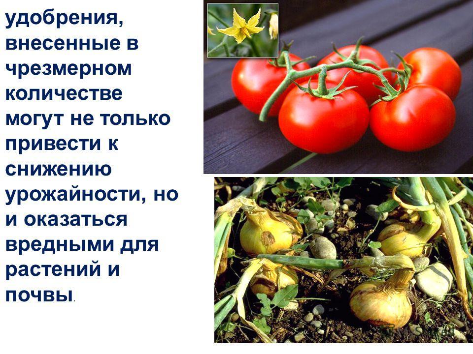 удобрения, внесенные в чрезмерном количестве могут не только привести к снижению урожайности, но и оказаться вредными для растений и почвы.