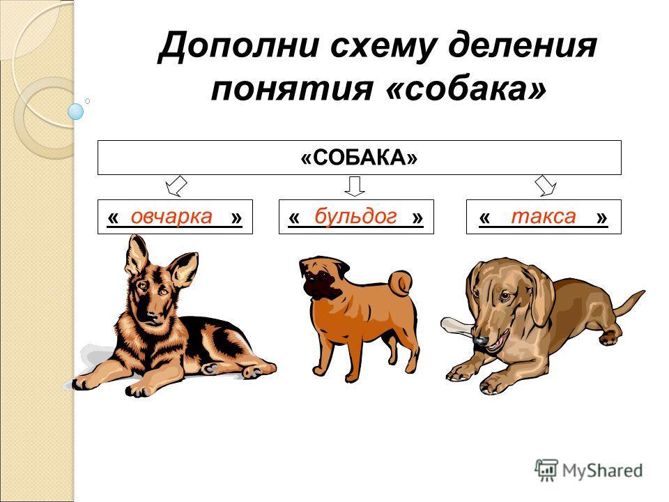 Дополни схему деления понятия «собака» «СОБАКА» « » овчаркабульдогтакса