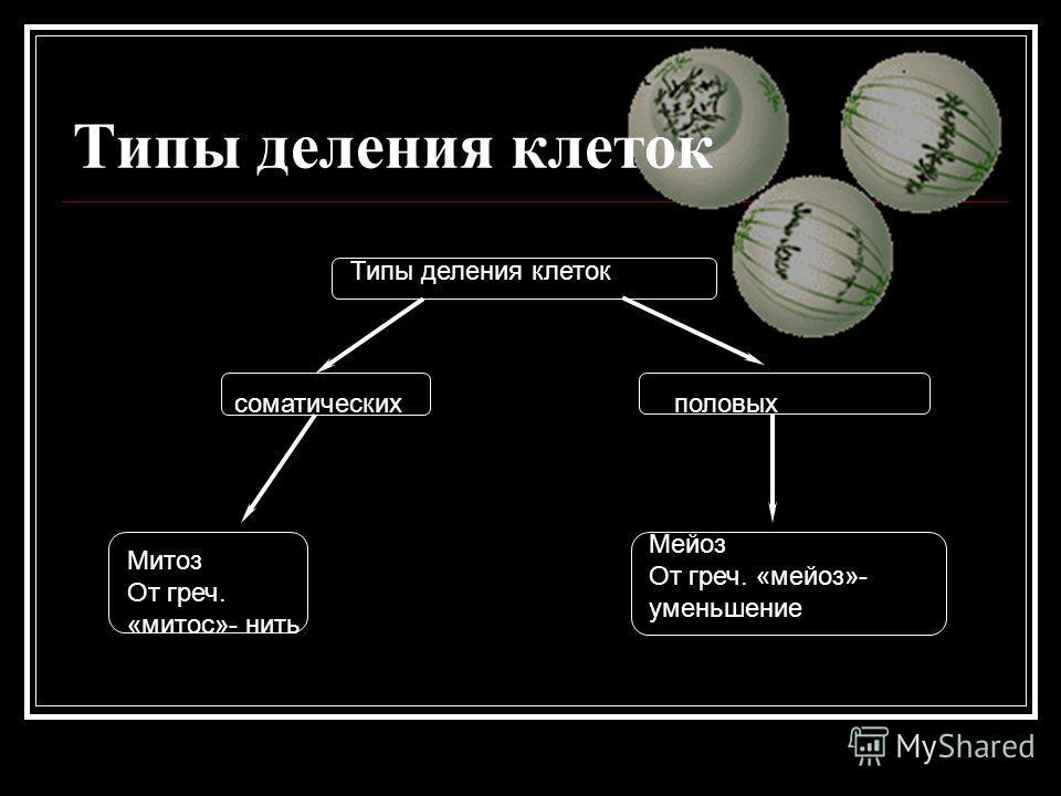 Типы деления клеток половыхсоматических Типы деления клеток Митоз От греч. «митос»- нить Мейоз От греч. «мейоз»- уменьшение