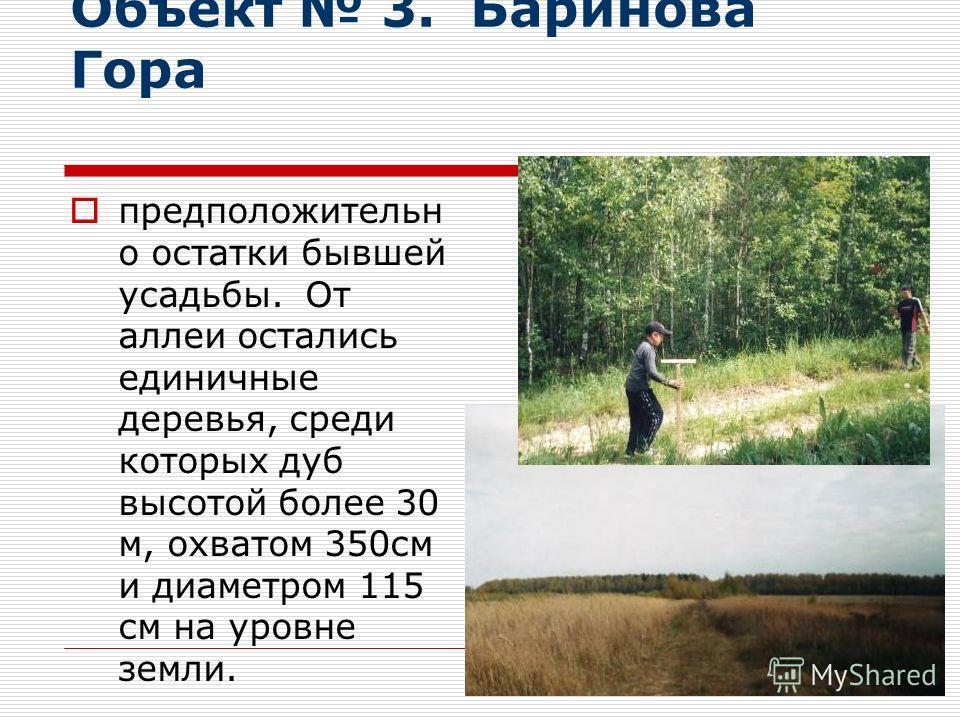 Объект 3. Баринова Гора предположительн о остатки бывшей усадьбы. От аллеи остались единичные деревья, среди которых дуб высотой более 30 м, охватом 350см и диаметром 115 см на уровне земли.