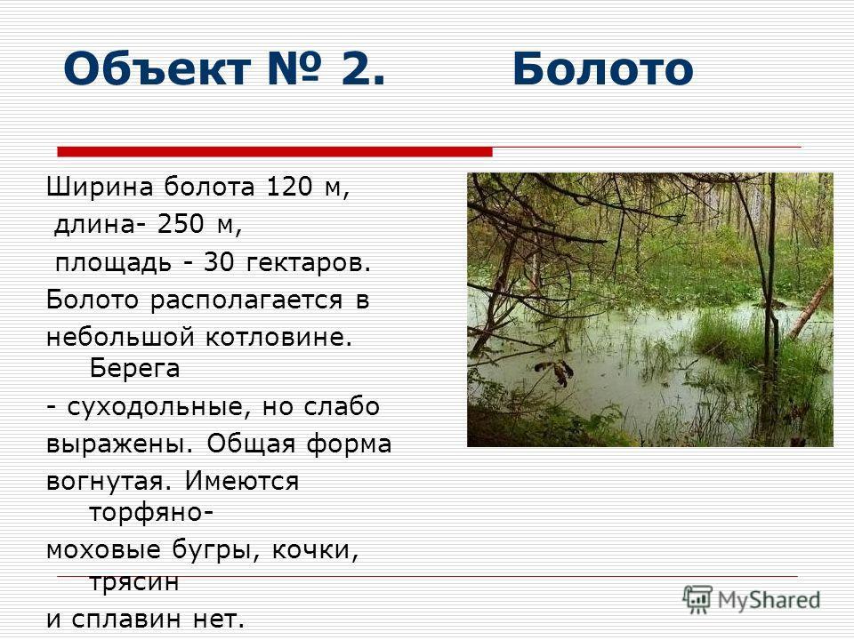 Объект 2. Болото Ширина болота 120 м, длина- 250 м, площадь - 30 гектаров. Болото располагается в небольшой котловине. Берега - суходольные, но слабо выражены. Общая форма вогнутая. Имеются торфяно- моховые бугры, кочки, трясин и сплавин нет.