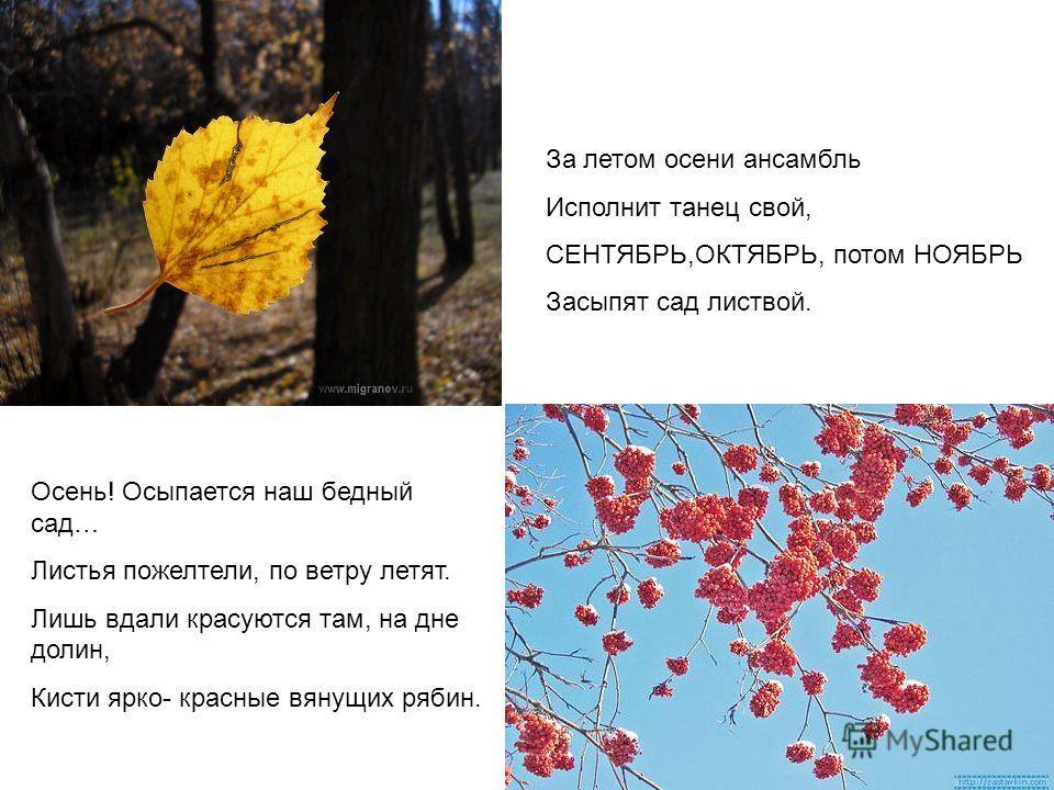 За летом осени ансамбль Исполнит танец свой, СЕНТЯБРЬ,ОКТЯБРЬ, потом НОЯБРЬ Засыпят сад листвой. Осень! Осыпается наш бедный сад… Листья пожелтели, по ветру летят. Лишь вдали красуются там, на дне долин, Кисти ярко- красные вянущих рябин.